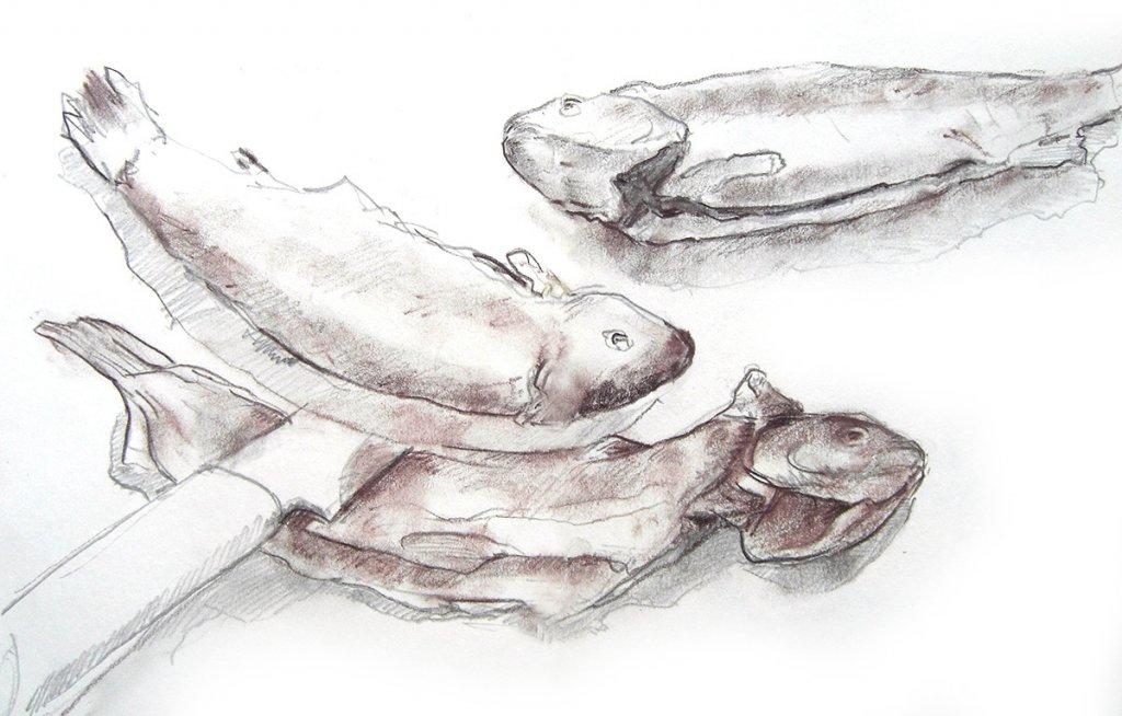 Ein Stilleben: Fische [Zeichnung]